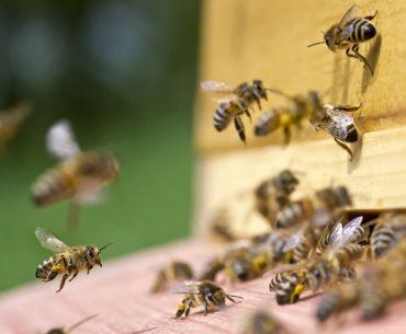La ruche une source de bien être avec l'apithérapie