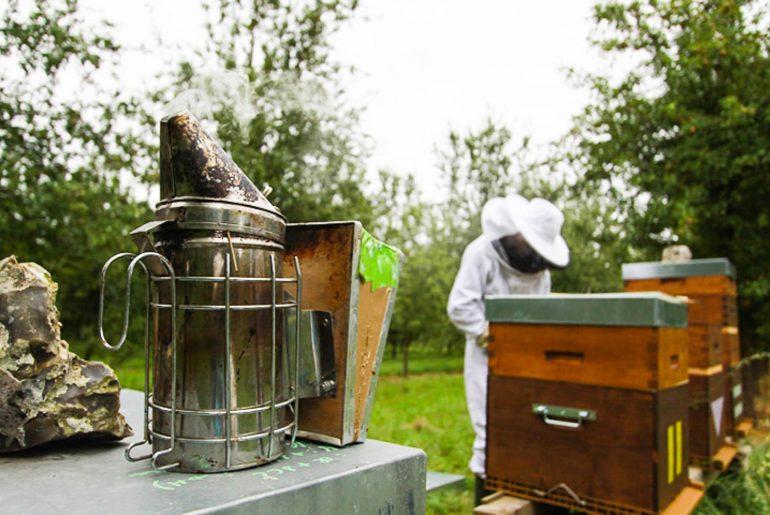 Récolte du miel par l'apiculteur